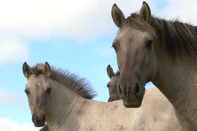 In frau kommt pferd Können Mädchen