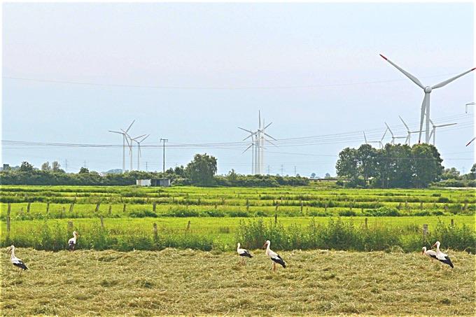 Windenergie Unfaires Versteckspiel Nabu Schleswig Holstein